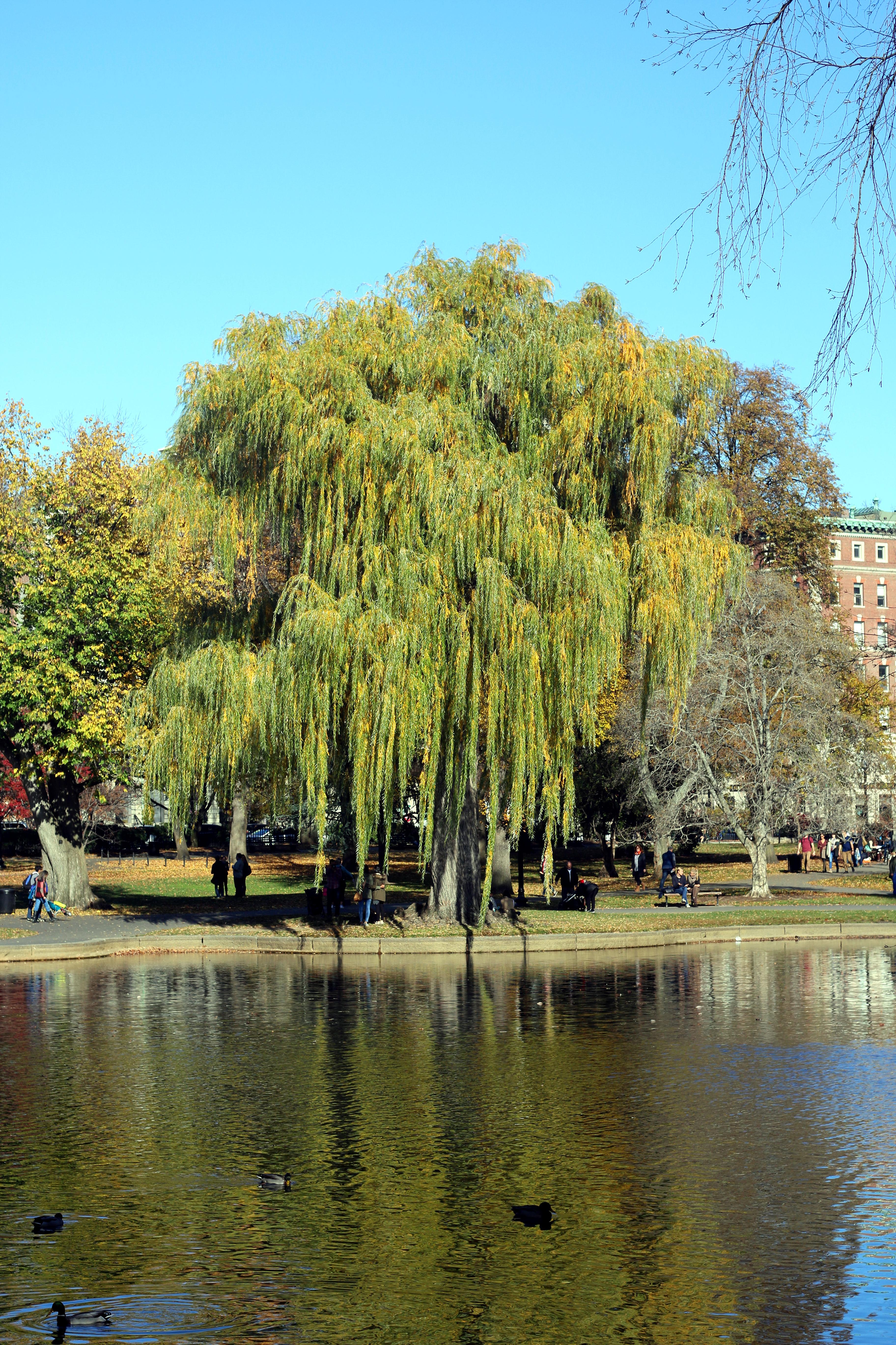 Et træ i parken.